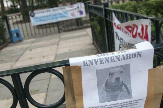 Alerta sobre envenenamiento de perros en el Parque México. Foto: Twitter