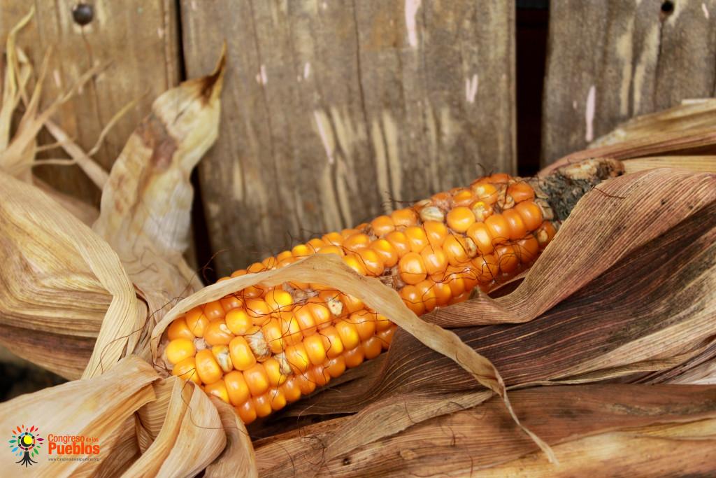 Sin maíz no hay país. Foto: Congreso de los Pueblos/Flickr
